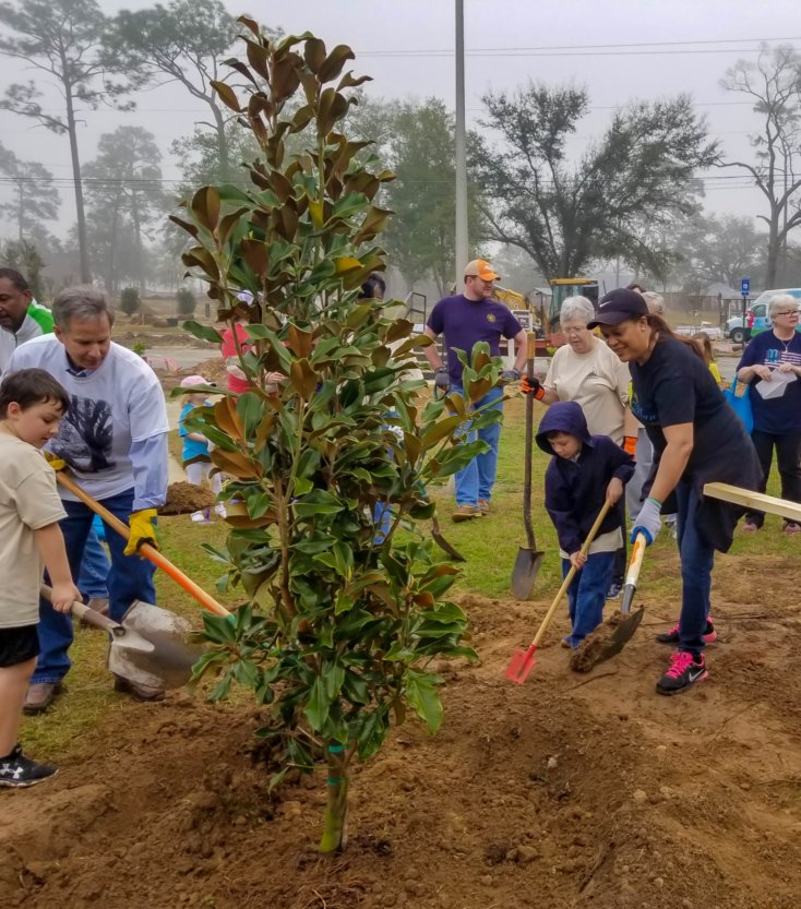 Grow Albany Trees in Tift Park
